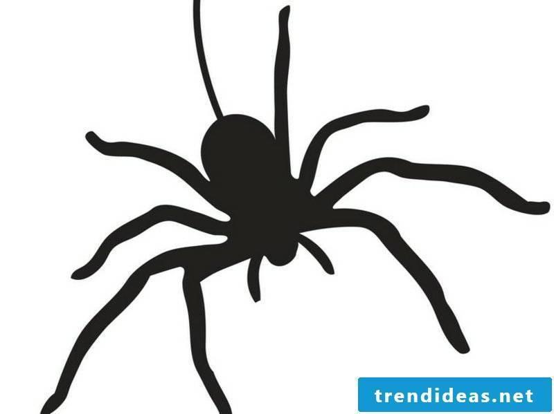 Halloween pumpkin carving templates spider