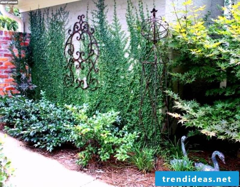 hardy balcony plants suitable