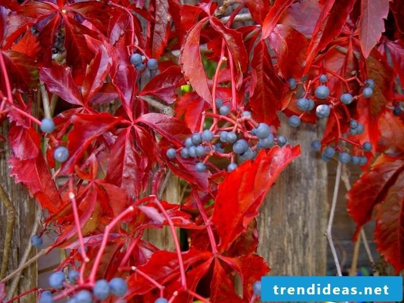 hardy balcony plants red
