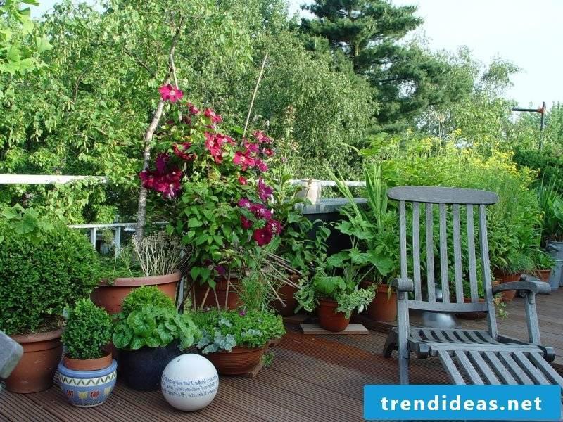 hardy balcony plants colorful