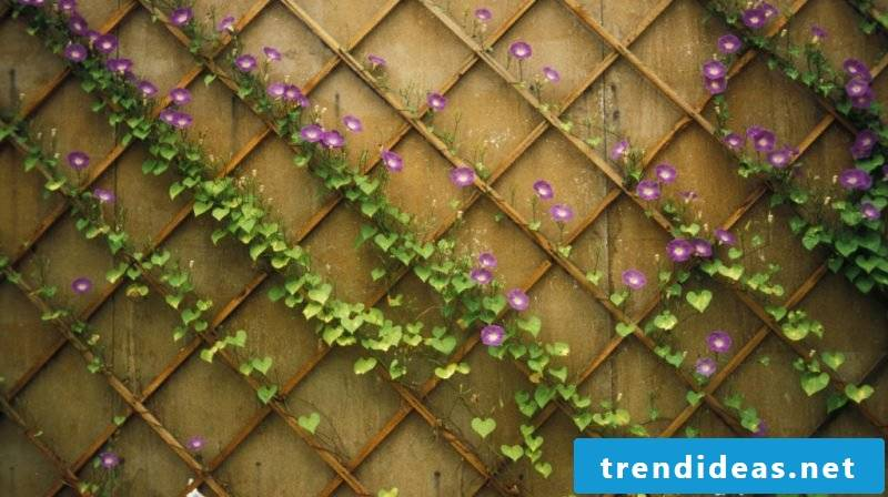 hardy balcony plants purple
