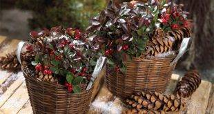Hardy balcony plants - 23 lively suggestions for the gray winter