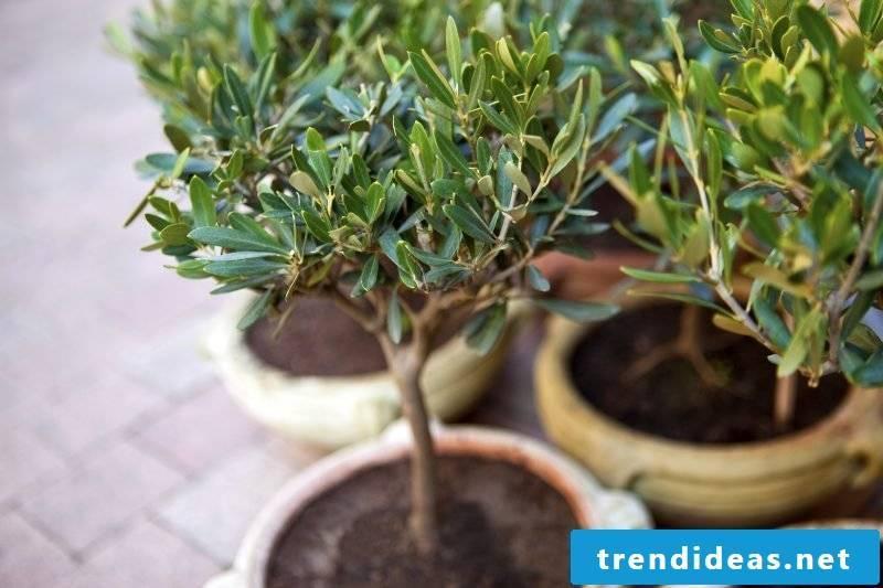 hardy balcony plants interesting