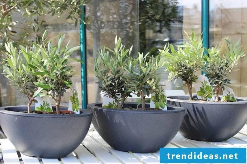 hardy balcony plants strong
