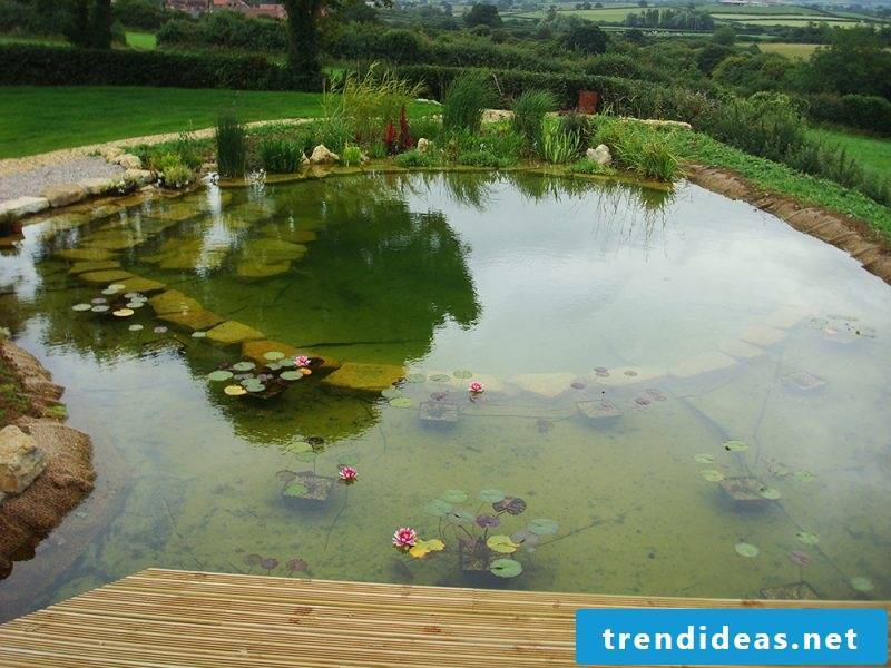 Swimming pond costs modern