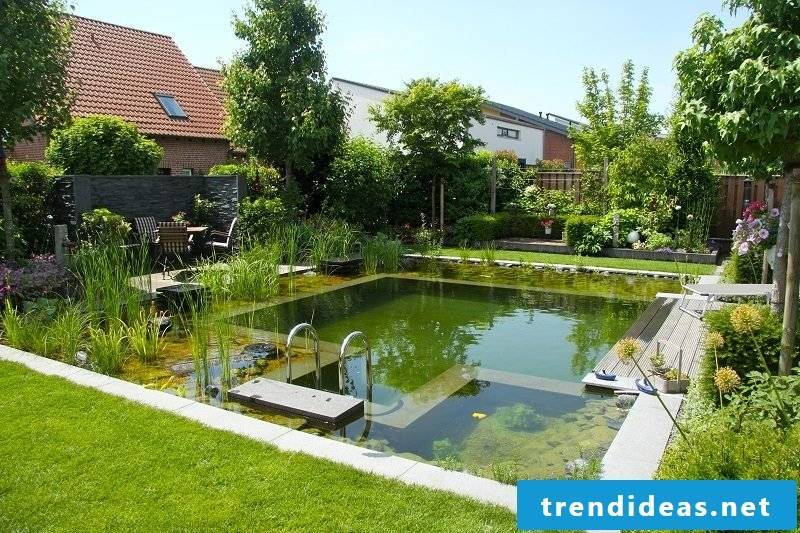 swimming pond cost now