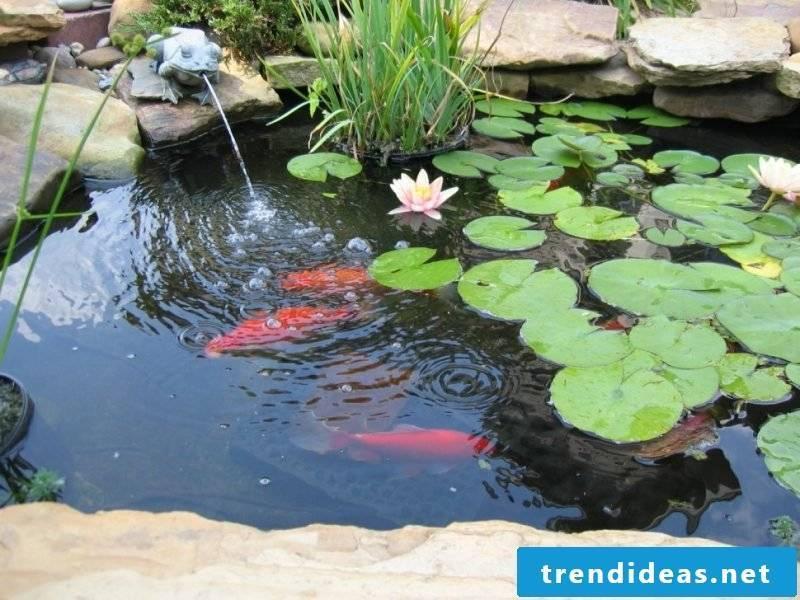 swim pond cost