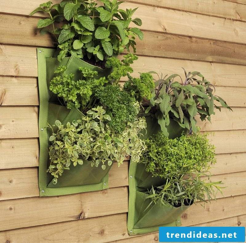 Vertical garden of herbs