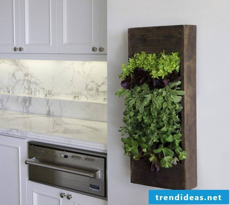 Vertical garden as decoration in kitchen
