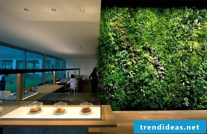 Vertical garden on the whole wall