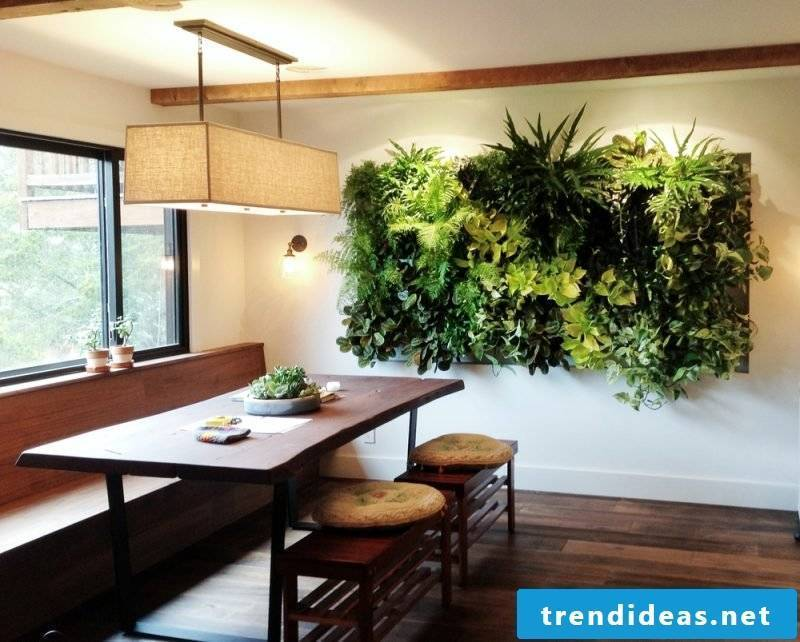 Vertical garden in the kitchen