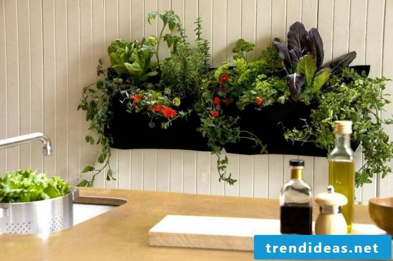 Vertical garden instead of kitchen wall