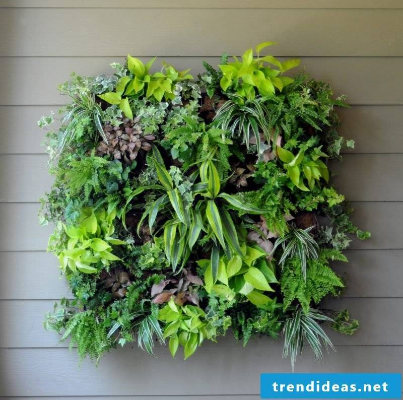 You can design a vertical garden in the picture frame