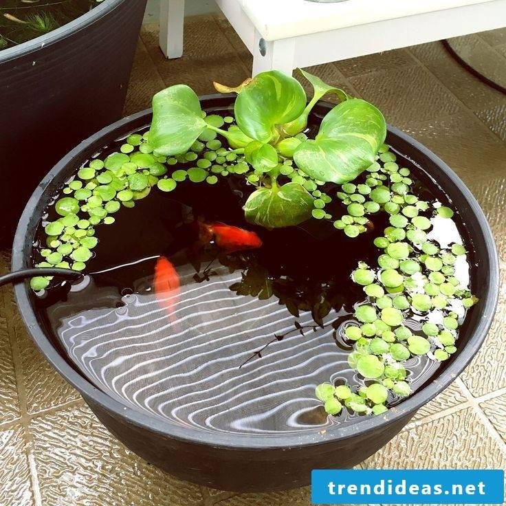 Great garden ideas for little money - mini-pond with fish