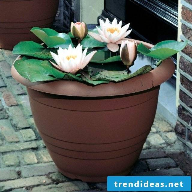 Mini pond in the pot: Read helpful tips for balcony design here
