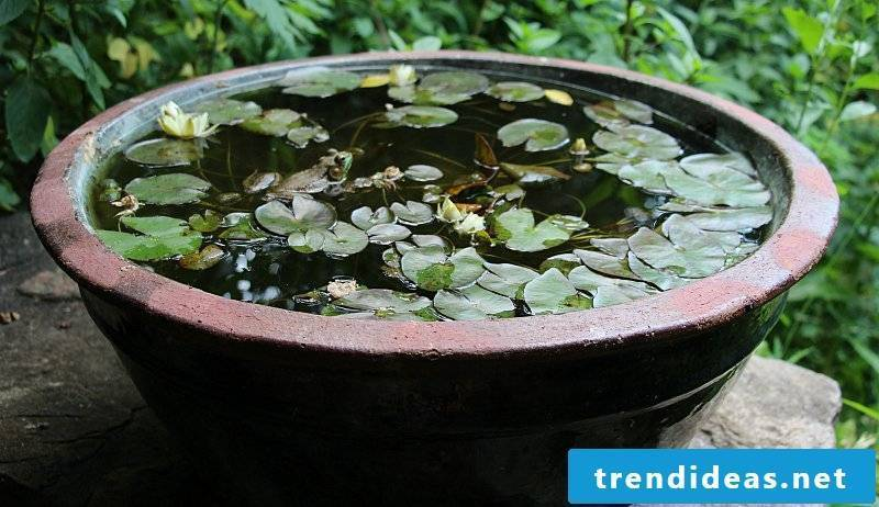 Make your own balcony ideas: DIY instructions for mini-pond