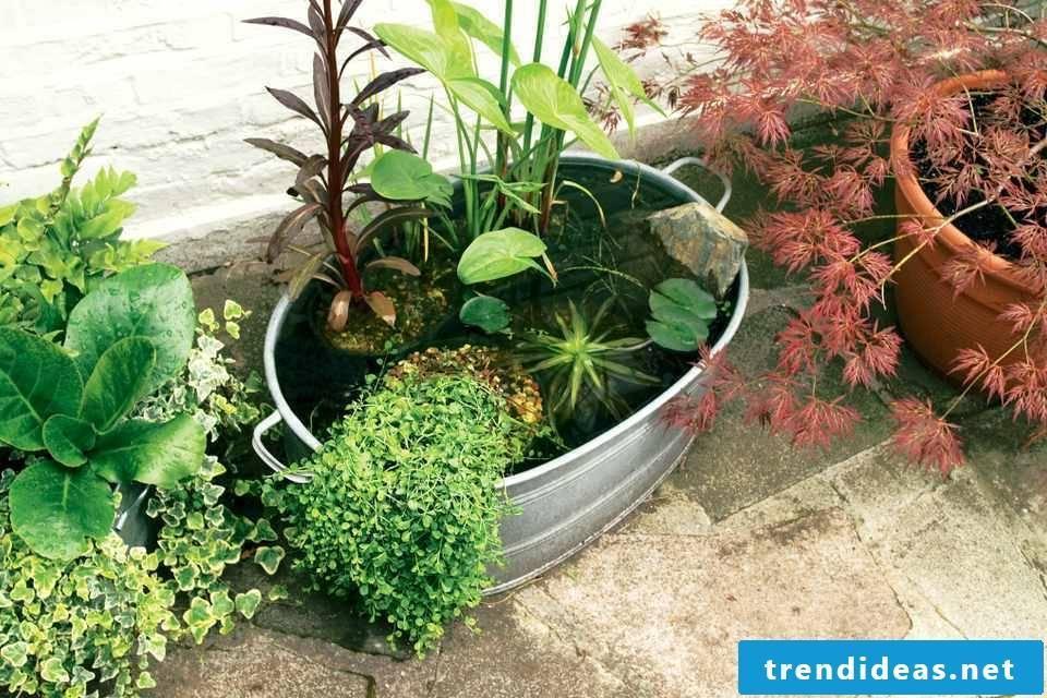 Mini garden design: tips and tricks for a garden on the balcony