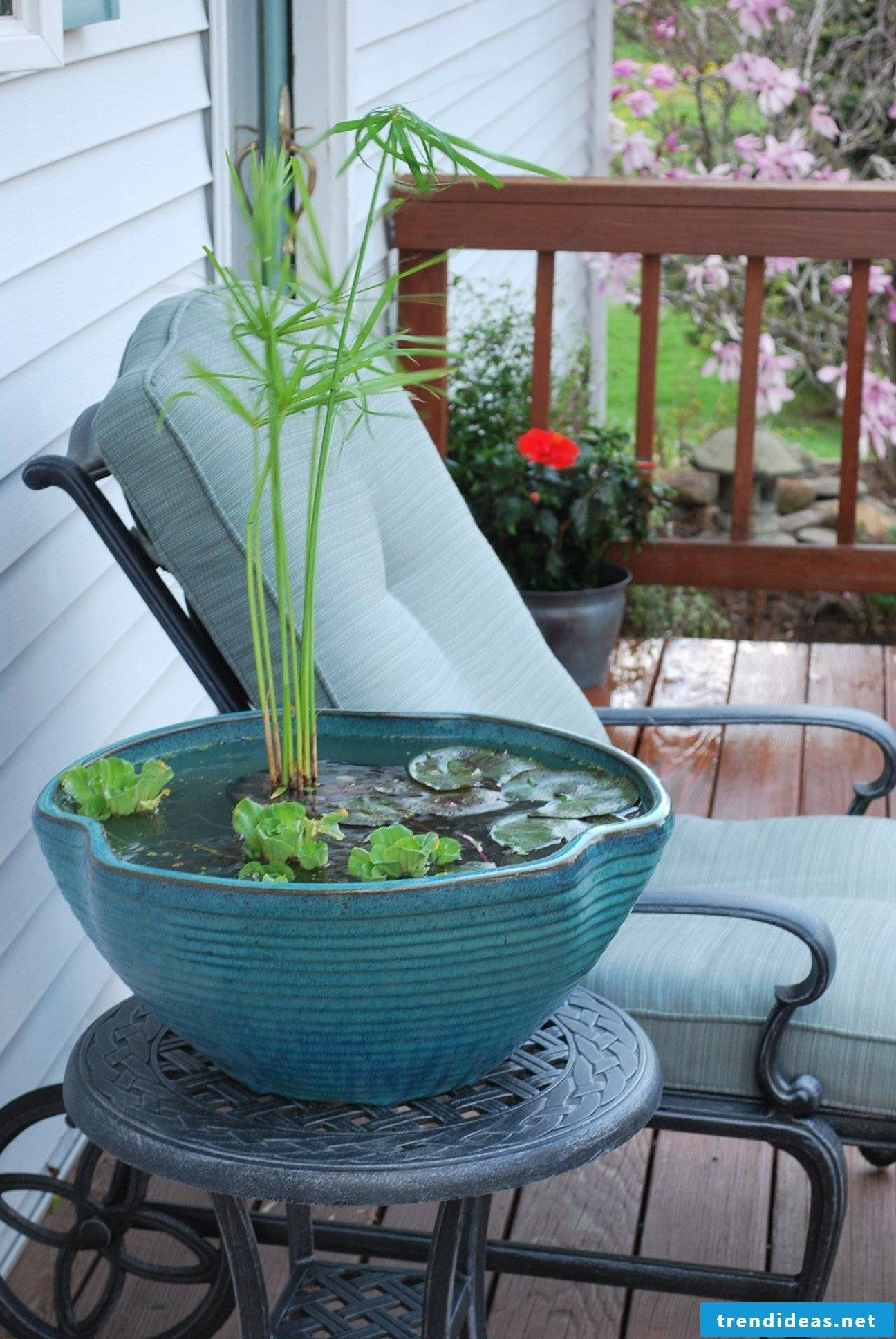 DIY mini-pond in the pot: step by step
