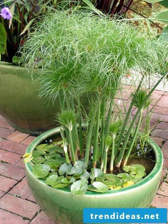 Great garden ideas for little money - mini pond in the pot