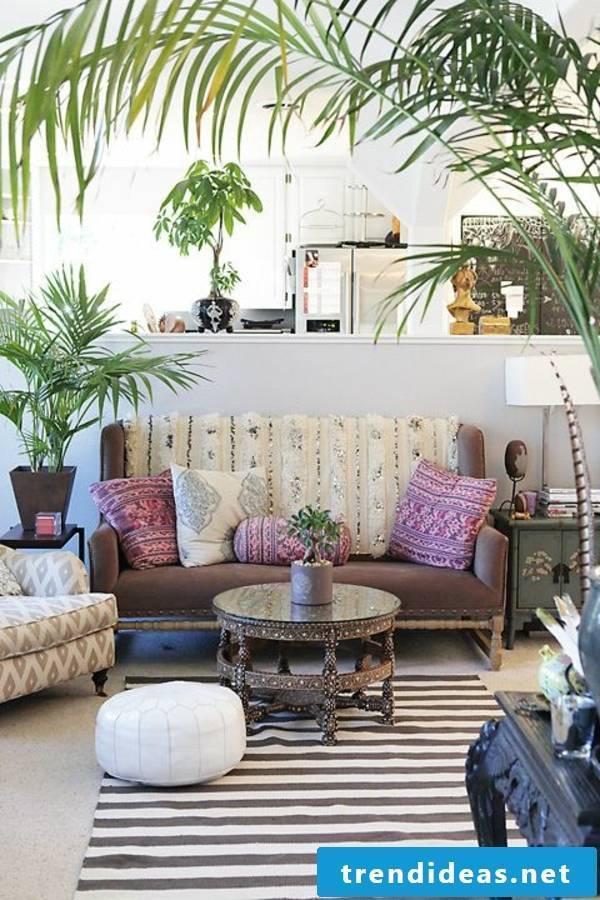 indoor plants determine in the living room