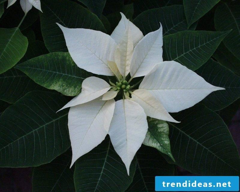 indoor plants already determine
