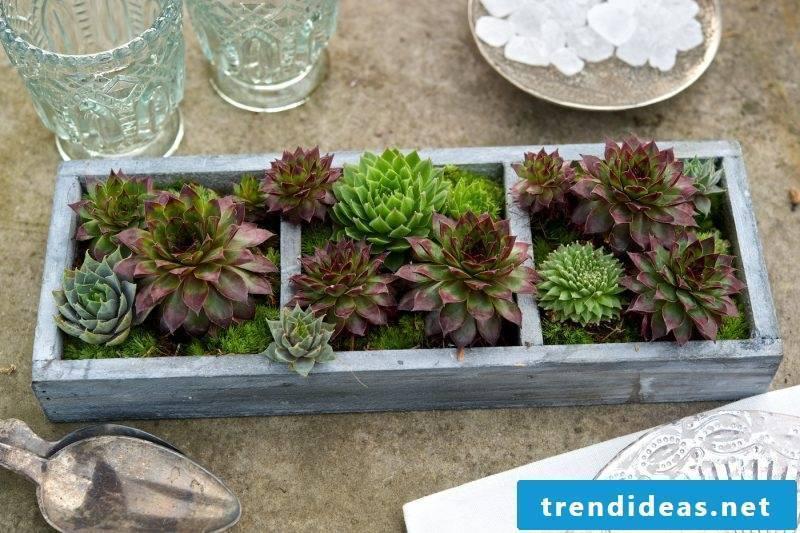 Decorative Succulents - Simone Kaiser - 83071 Stephanskirchen - Hofau 29 - 08031/780695 - 0176/63229996