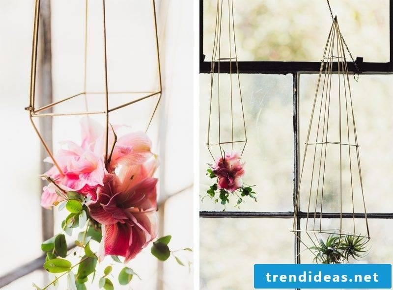 indoor plants determine the same