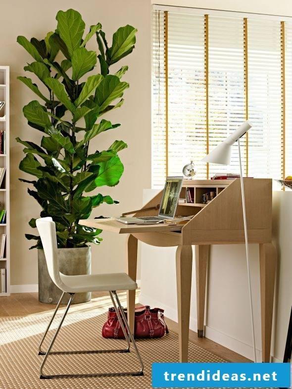 Indoor plants determine pretty much