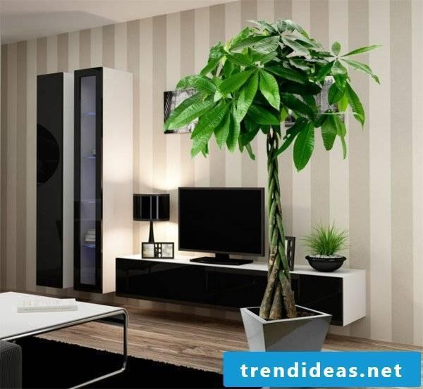 indoor plants determine correctly