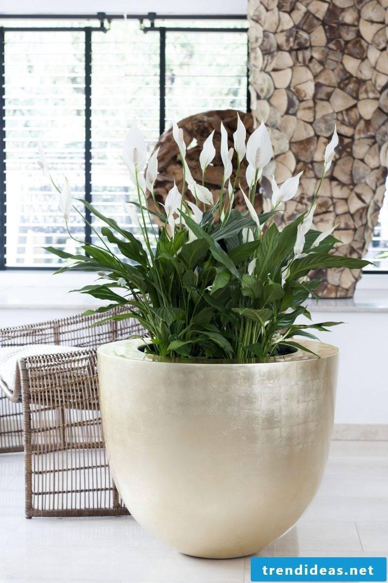indoor plants determine cheap