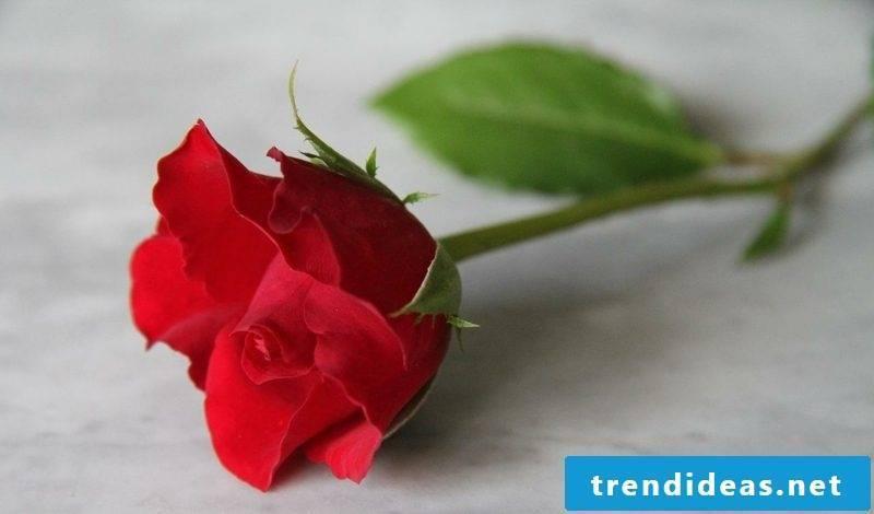 Eros Principle Lotus Mandala plants