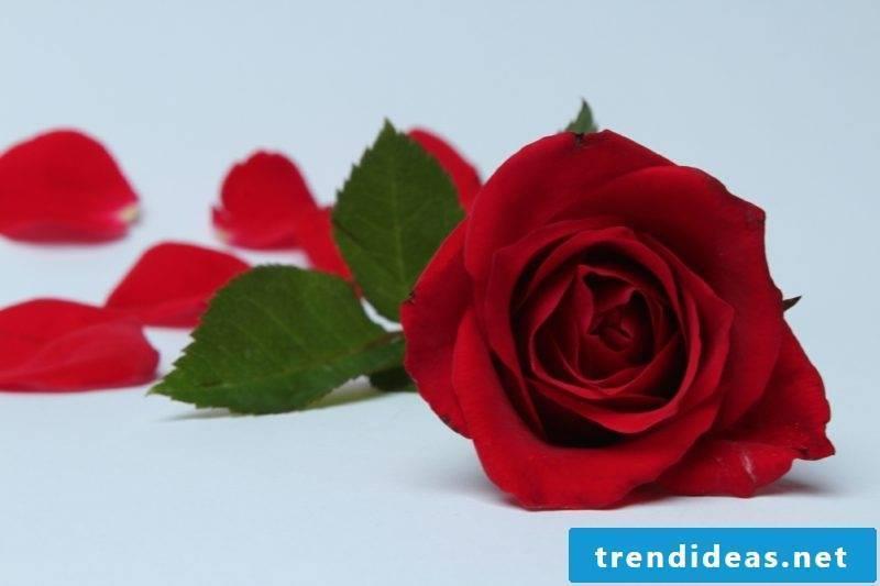 Alchemy flower Eros Principle Lotus