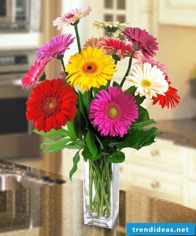 Gerbera is a compliment!