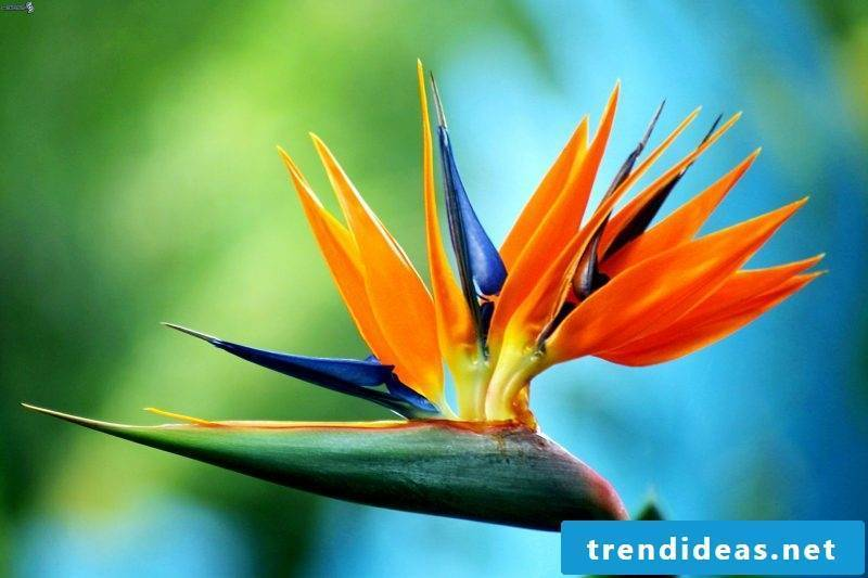 flowers stezilia