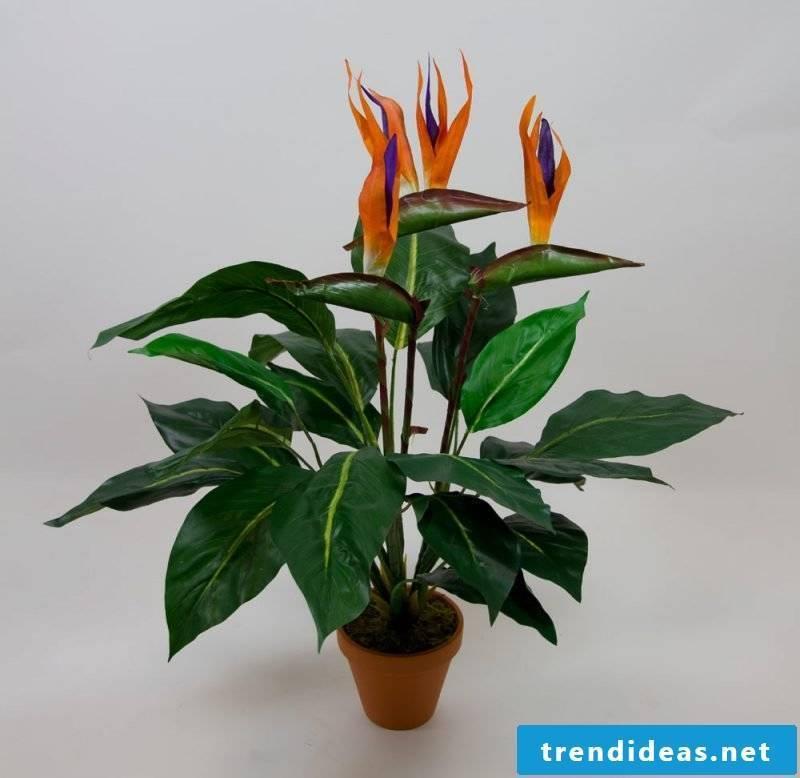 flowers strezilia