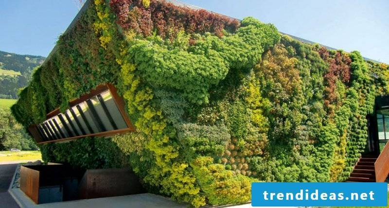 vertical garden home wall garden