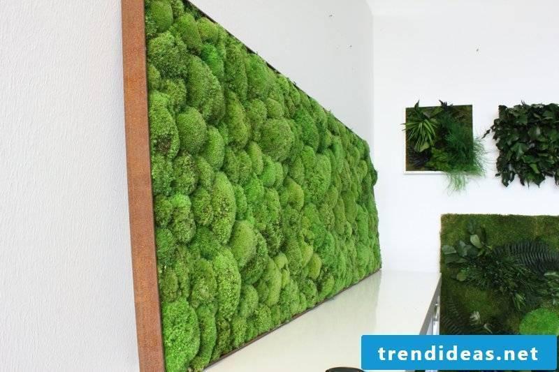 vertical garden Kugelmoos Indoor Stylegreen