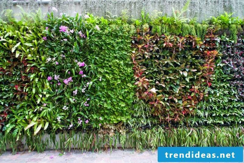 vertical garden outdoors