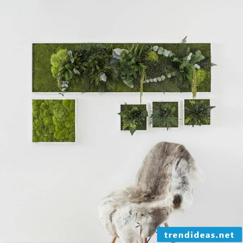 vertical garden plants and moss pictures