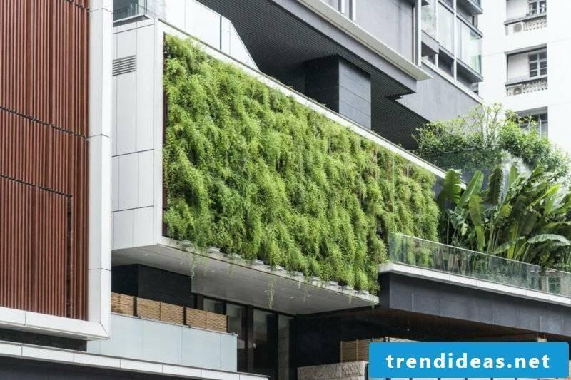 vertical garden Vertical garden