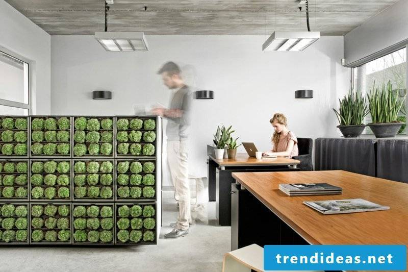 vertical-garden-wall garden as a light shield